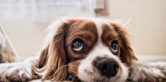 kućni ljubimci_pas