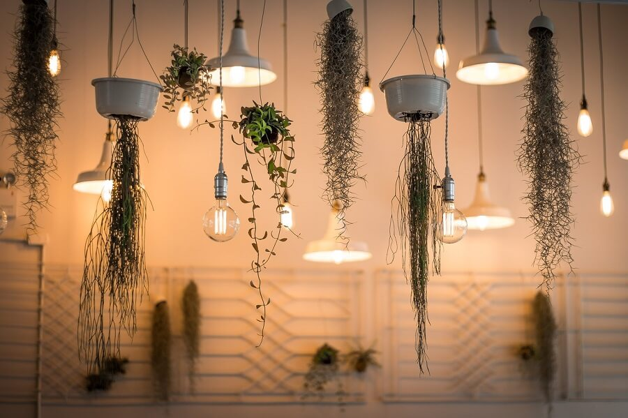 lights-hanging plants