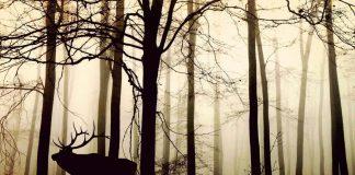 šuma_životinje_priroda