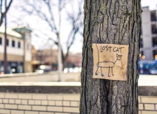 poster_izgubljena_mačka_kućni_ljubimac_oglas
