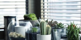 cvijeće_dom_biljke_vaze