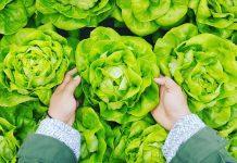 povrće_salata_veganska_prehrana_vegetarijanstvo
